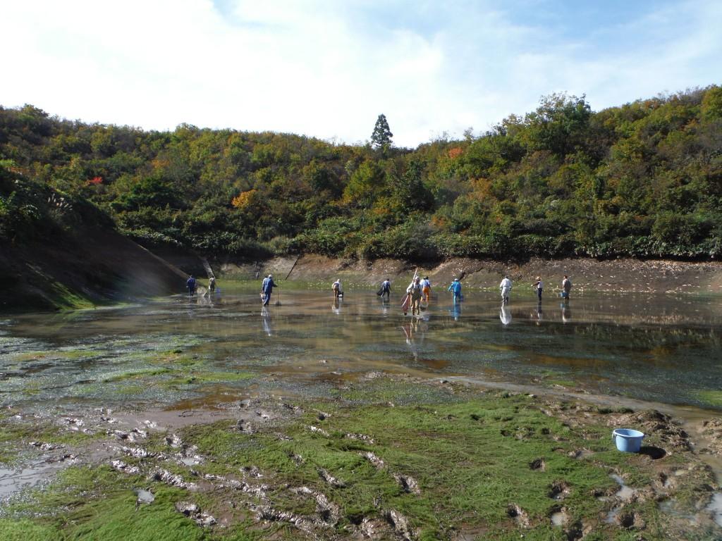 161021魚沼ため池駆除状況